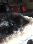 Prissy Dreaming