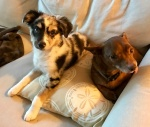 Izzy Lounging with Pippen
